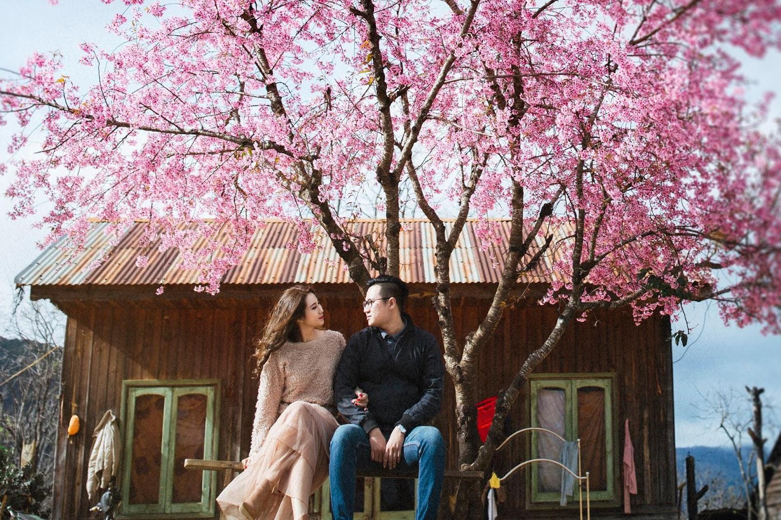 Ngắm hoa anh đào khi du lịch Đà Lạt dịp Tết Nguyên đán 2021